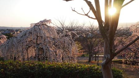夕日にそまる植物園