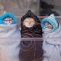 Photos: which-one-is-cuter21