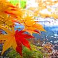 写真: 家の近くの紅葉