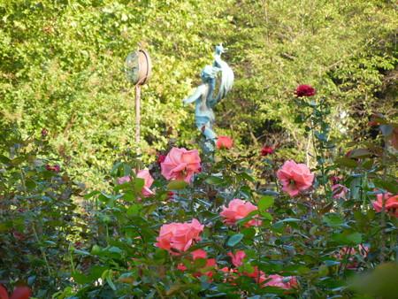 与野公園のバラ (7)