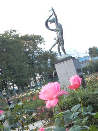与野公園のバラ (39)