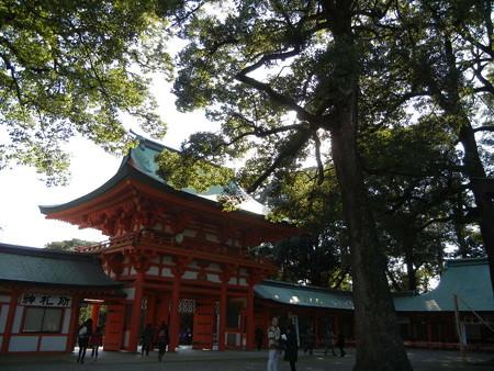 杉の樹も大きくて