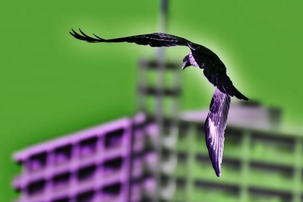 舞子ビラ野鳥-ドラマチック(1)