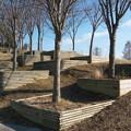 Photos: 冬の植木