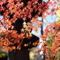 写真: 上野公園の紅葉