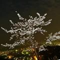 Photos: 桜と光桜(実験写真)