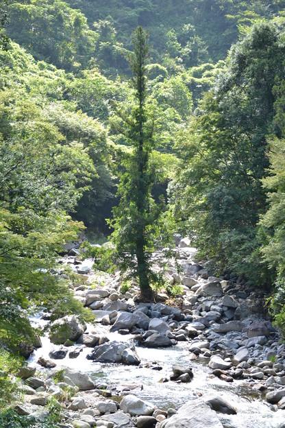 川の中の木