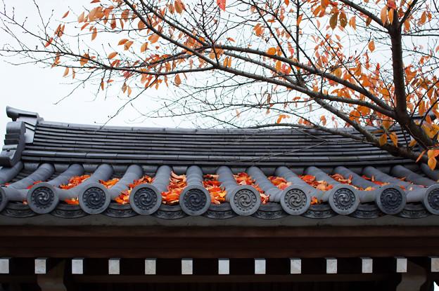 京都 知恩院付近 1