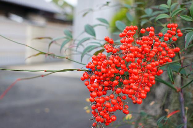 京都 知恩院付近 3