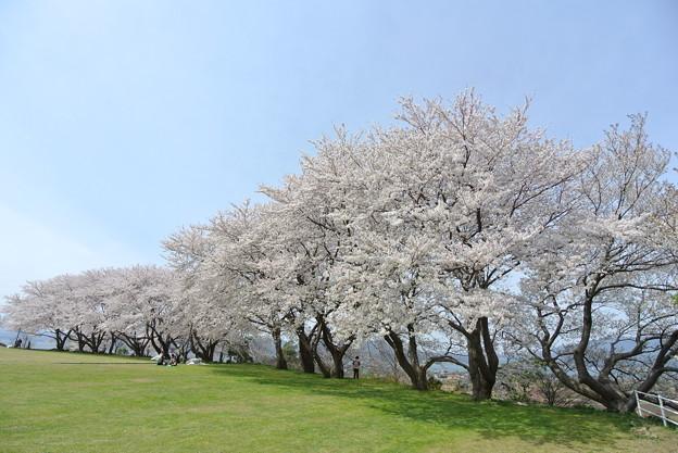 大塚山公園 2014.04 (1)