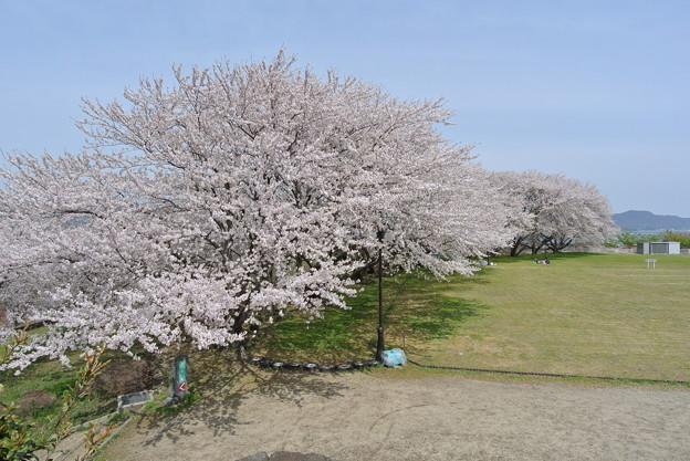 大塚山公園 2014.04 (3)