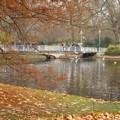 ベルサイユ宮殿近くの小川