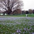 ロンドン公園