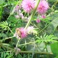 写真: ミニ花とみつばち