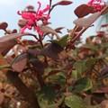葉も花もぜんぶ紅葉