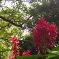 香港の紅葉