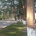中国の田舎道1