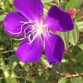 紫の花弁(ランの種類か?)