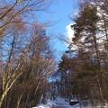 清水高原の山道