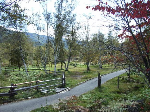 乗鞍高原の遊歩道