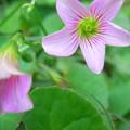 道端の可愛い花
