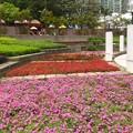 九龍公園の花