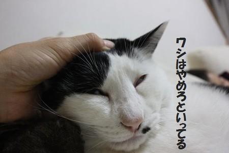 2012_10_16_0357