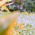 会社の庭 初夏の調和 (3)