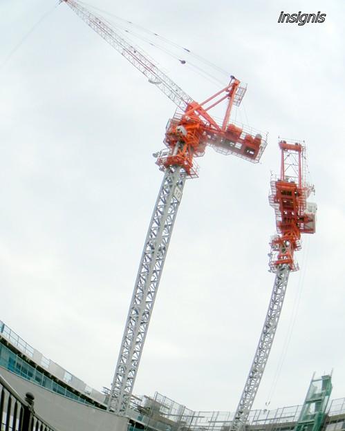 The Cranes ?