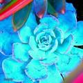 Blue drop.........