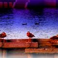 In the twilight ...........