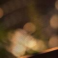 『第74回モノコン』 網戸とスティールチェアの融合.......