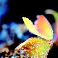 Confetto color...........