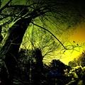 雑木林の憂鬱......