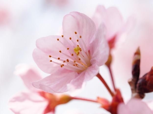 【花にオススメ】マクロ写真の撮影方法とコツまと …