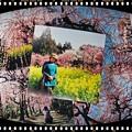 スプリングカメラ 「春爛漫」