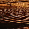 写真: 朝日の鎌倉彫
