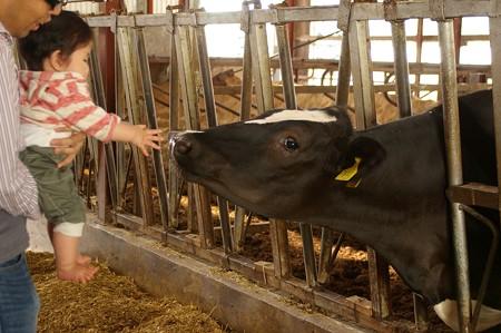 牛さんハロー