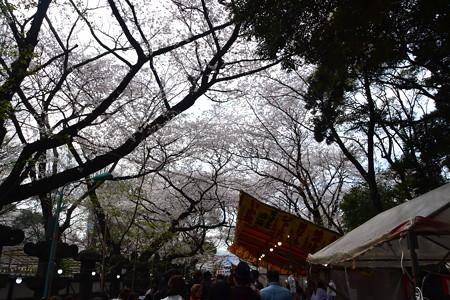 出店と桜@上野公園/上野東照宮 [3/28]