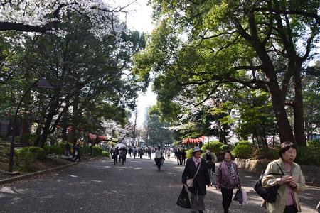 緑のトンネル@上野公園 [3/28]