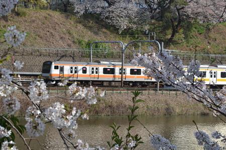 桜とE233系0番台と209系@飯田橋-市ヶ谷 [3/28]