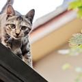 Photos: 屋根の上のとら