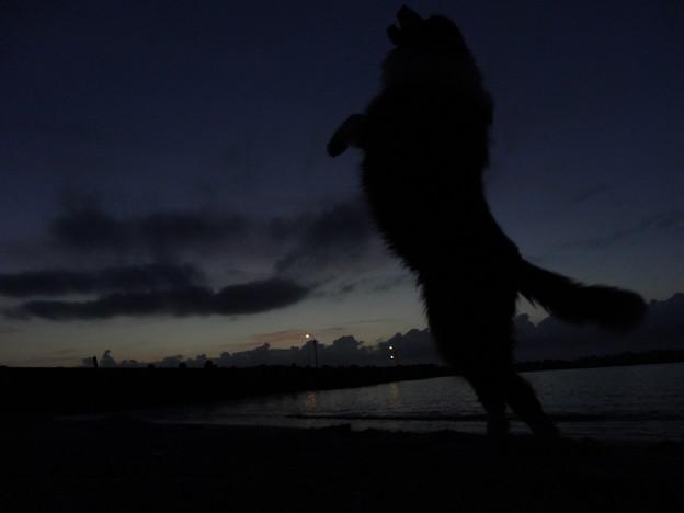 夕空に向かってワン!