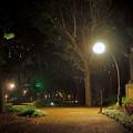 Photos: 夜の偉人の森142cc