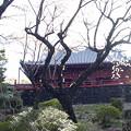 清水観音堂と桜吹雪318