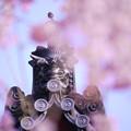 枝垂れ桜と鬼瓦651tc