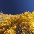 青と黄色の競演