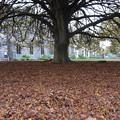 写真: 落葉の絨毯
