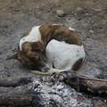焚き火で一晩過ごした犬