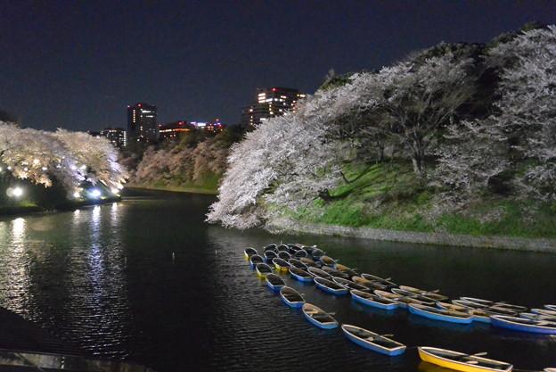 夜桜 千鳥が淵02